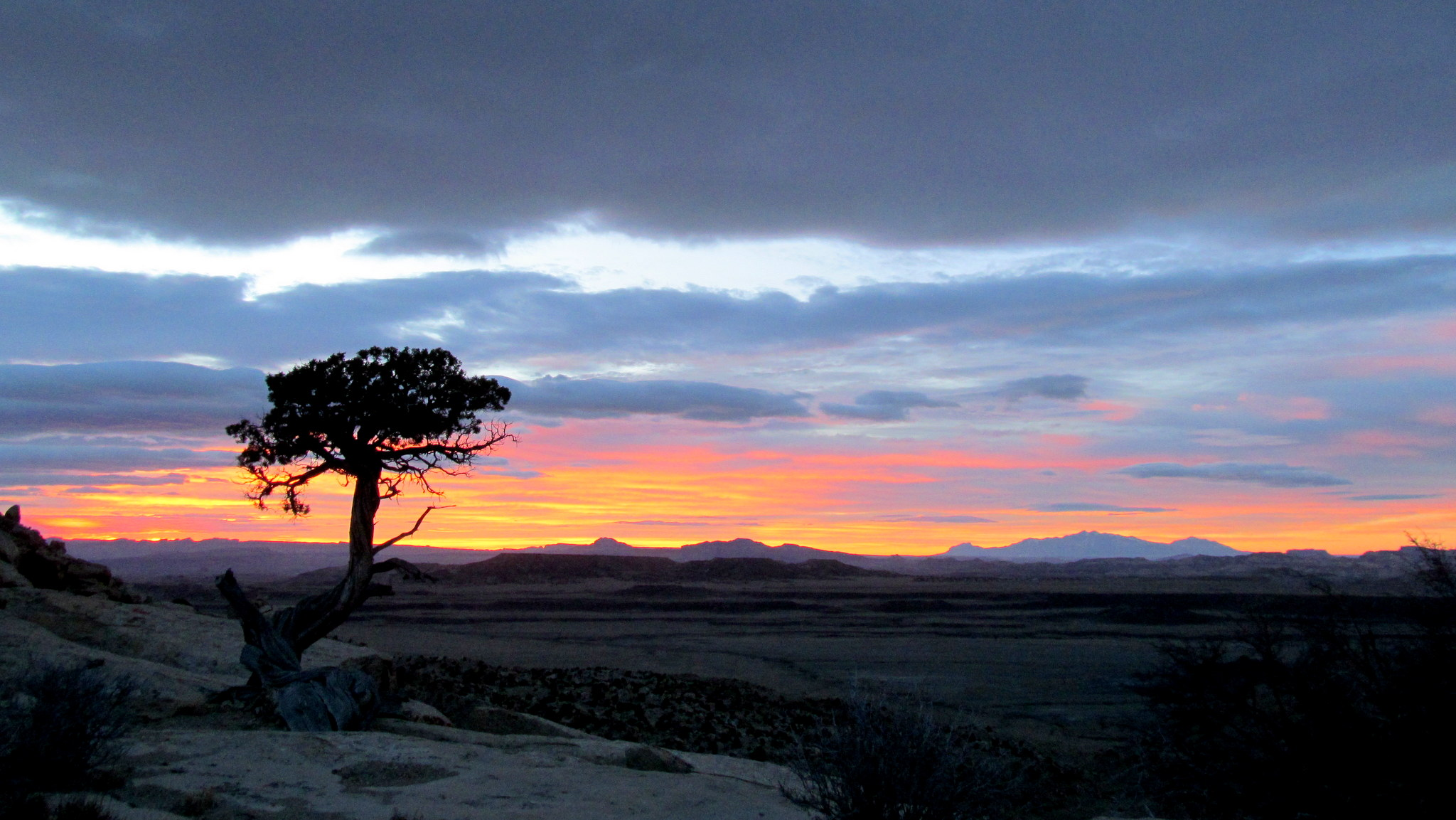 Photo: Juniper sunrise
