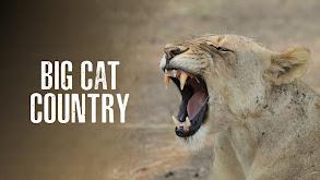 Big Cat Country thumbnail