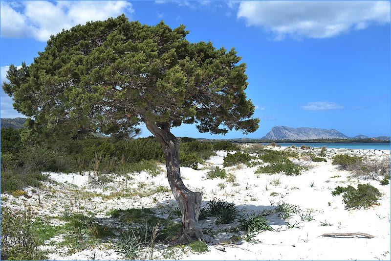 la belleza della Sardegna di Inna