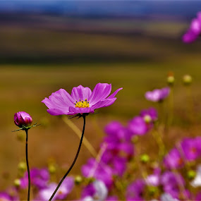 by Orpa Wessels - Flowers Flowers in the Wild (  )