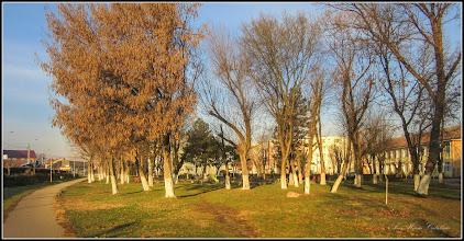 Photo: Calea Victoriei, parc in Mr.1 - 2018.01.01