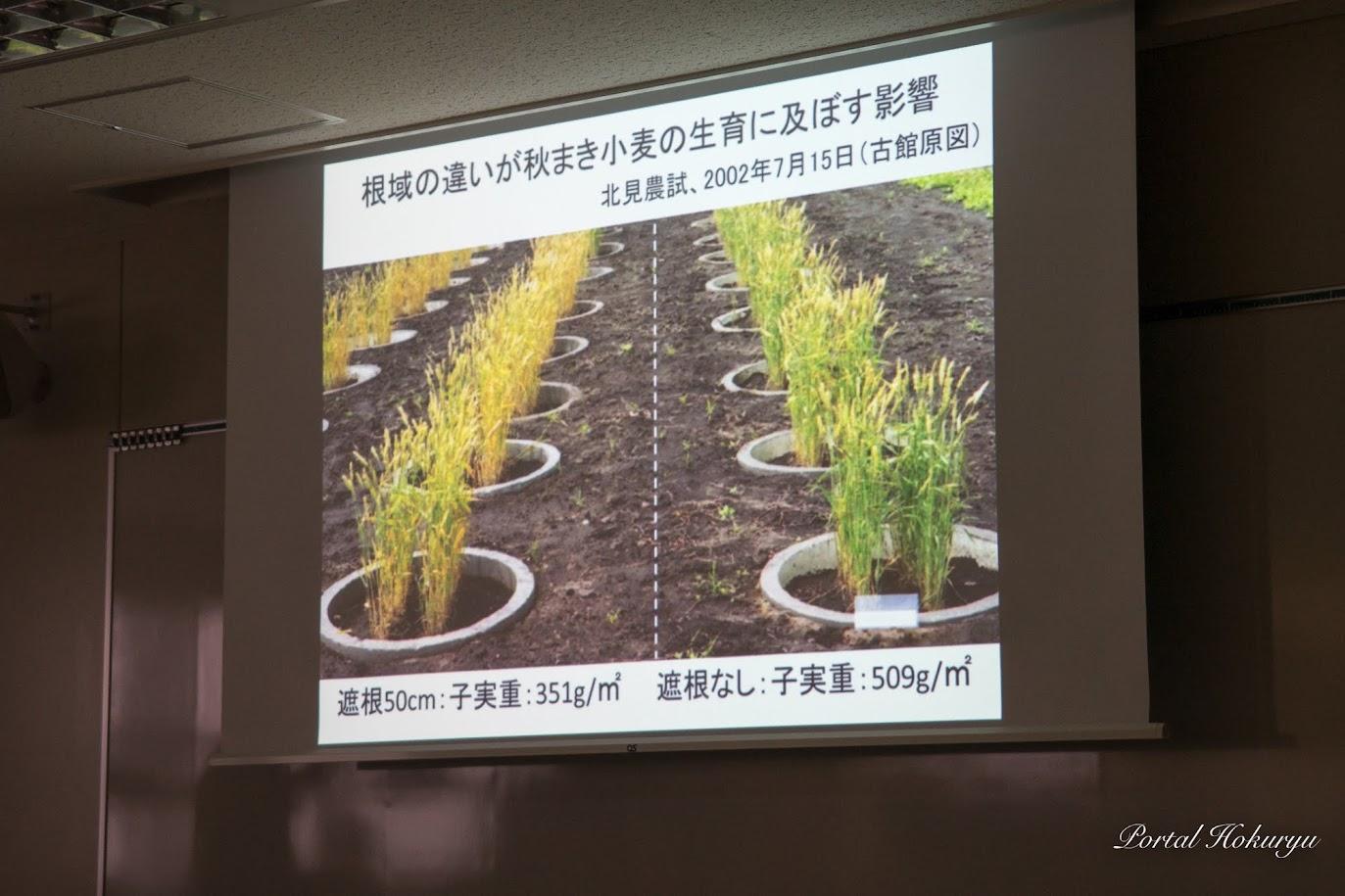 地域の違いが秋まき小麦の生育に及ぼす影響