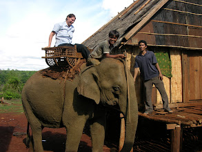 Photo: Suzanne on a Elephant ride. Just like a horse, he dragged his feet leaving and speed up on the way home.