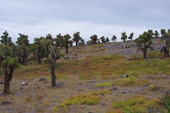 Photo: Crazy Galapagos Cactus