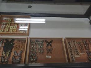 写真: 昆虫標本