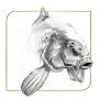 Koi Fish Sketch APK icon