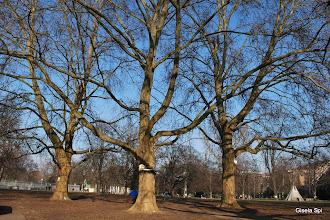 Photo: Wunderschöne Bäume