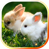 Bunnies live wallpaper
