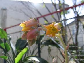 Photo: 「ローズ」のお花