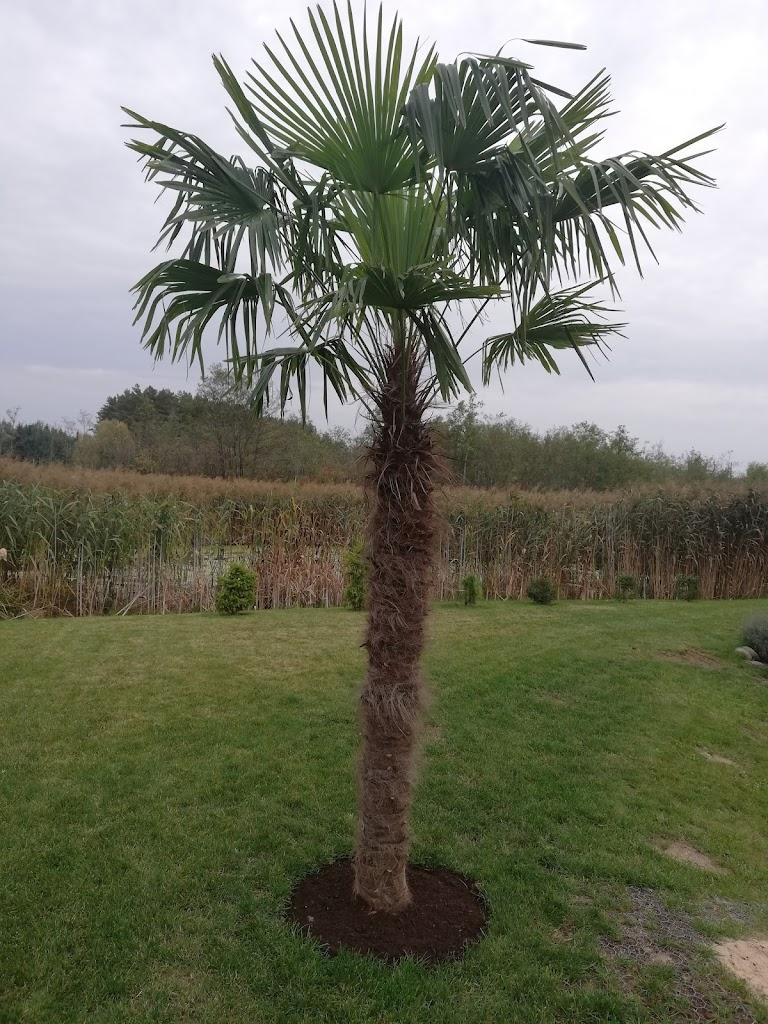palme-epmc