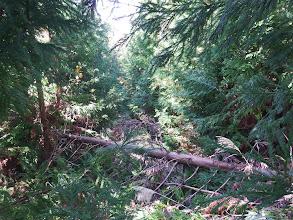 林道を進みかけるが廃道