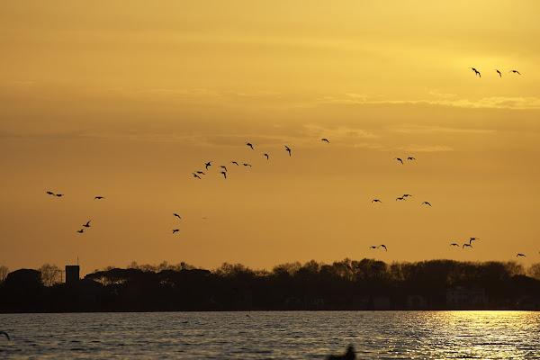 Birdwatching al tramonto di manolina