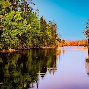 Arrival of the Fall by Bjørn Kristiansen - Landscapes Forests ( water, romeriksåsen, forrest, fall )