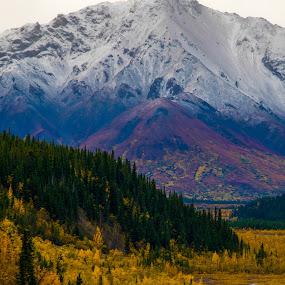 Alaska Range 1 by Russ Crane - Landscapes Mountains & Hills ( field, mountain, denali, alaska, forest, travel )
