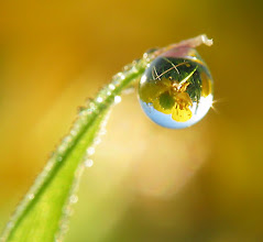 Photo: Old pic from a dewy spring moring.  For #FloralFriday, curated by +Tamara Pruessner.