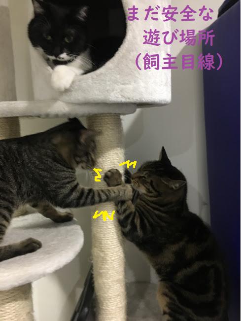 【スーパームーン】満月で猫が暴れる!?夜中の大運動会!w