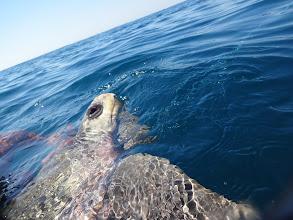 Photo: Tenle želvoun z nás asi nebyl moc nadšenej.