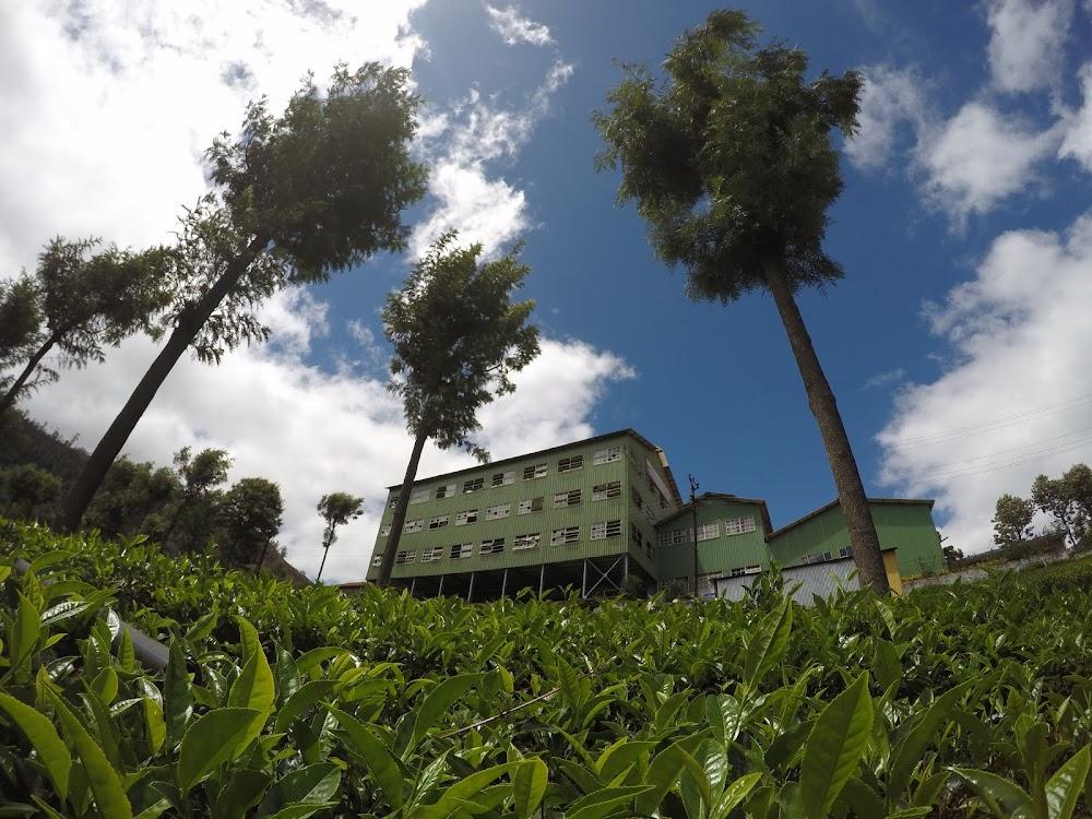 places-visit-coonoor-highfield-tea-factory_image
