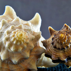 Two by Sergio Yorick - Artistic Objects Still Life ( pair, still life, artistic, seashell, object,  )