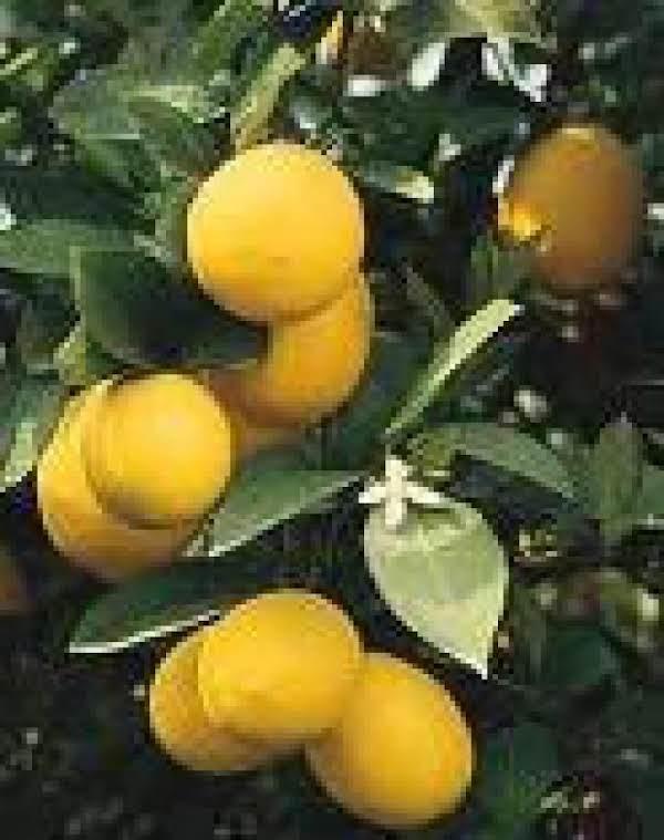 Meyer Lemon Jelly Recipe