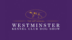 143rd Westminster Kennel Club Dog Show thumbnail