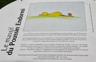 Photo: {1. Mimétisme ou imitation : l'avis des plantes} Le massif du poussin endormi