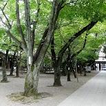 park at the yasukuni shrine in Chiyoda, Tokyo, Japan