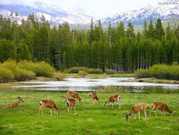 Las, Łąka, Jelenie, Rzeka NaPulpit