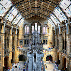 London Museum  by Abdul Rehman - Buildings & Architecture Public & Historical ( old, uk, london, architecture, museum, whale,  )