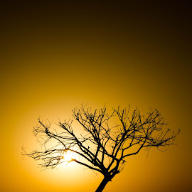 by Talha Abid - Nature Up Close Water ( #water, #sunrise, #tree, #nature )