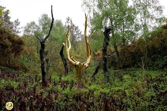 Photo: Albero d'oro della foresta incantata