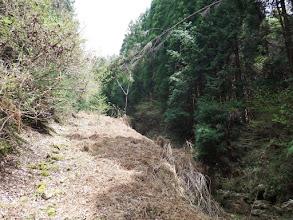 林道が荒れてきた
