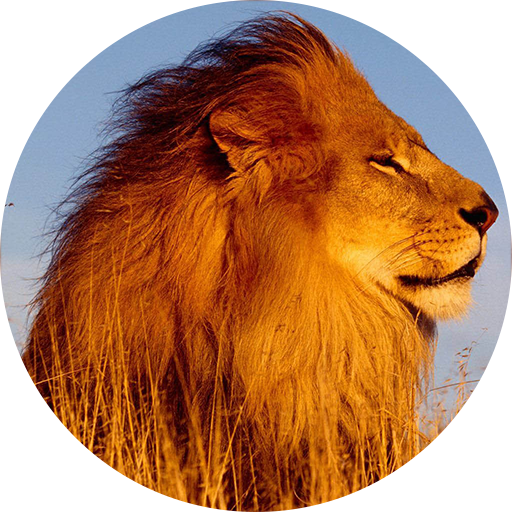 Lion Sounds And Ringtone Apps On Google Play