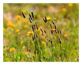 Photo: Eastern Sierras-20120717-699