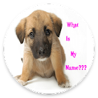 CUTE GIRL DOG NAMES APP 2019 icon