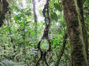 Photo: Hanging vines