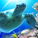 Sea Turtle LiveWallpaper Trial icon