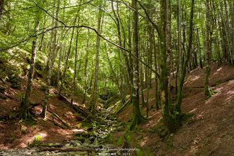 Photo: Selva de Irati.  Filtros: Polarizador