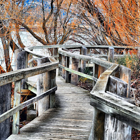 Boardwalk through Bird Sanctuary by Don Mann - City,  Street & Park  City Parks ( nature, canadian, kelowna, marsh, walkway, bc, boardwalk, British Columbia, BC Wildlife, BC Landscapes, BC Rivers, BC Parks, BC Culture, BC, Canada, BC Nature Photography, Photography, , path, landscape )