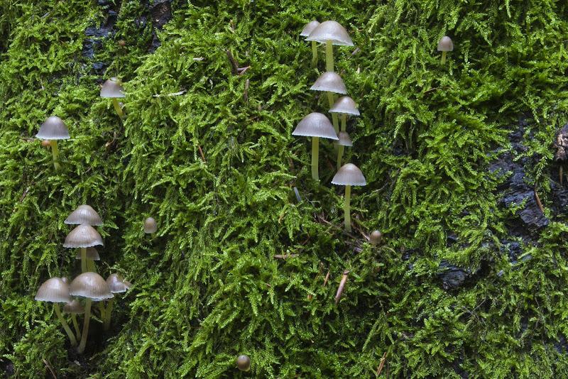 Ombrellini nel muschio di NadiaBettini