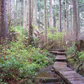 boardwalk to cape flattery,wa by Darrin McNett - Uncategorized All Uncategorized ( cape flattery, boardwalk,  )