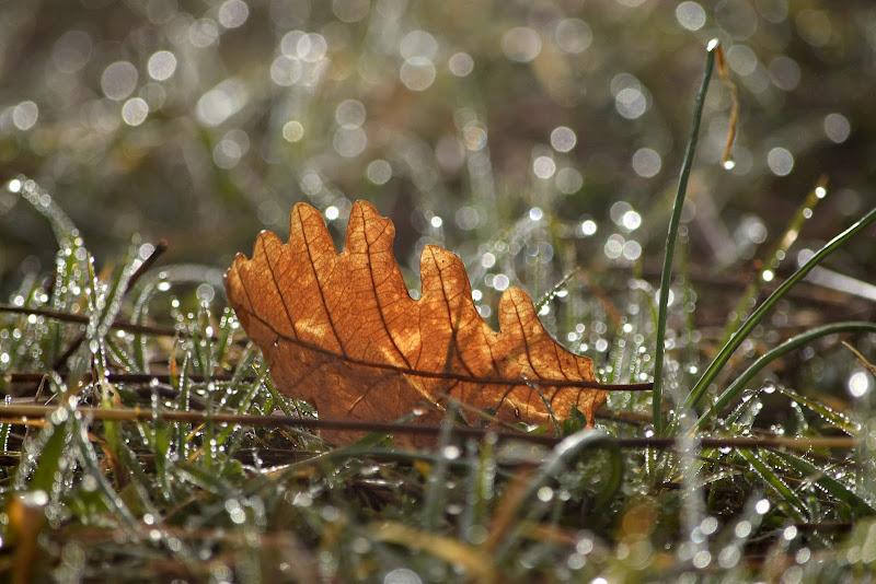 mattina d'autunno di irina sirbu