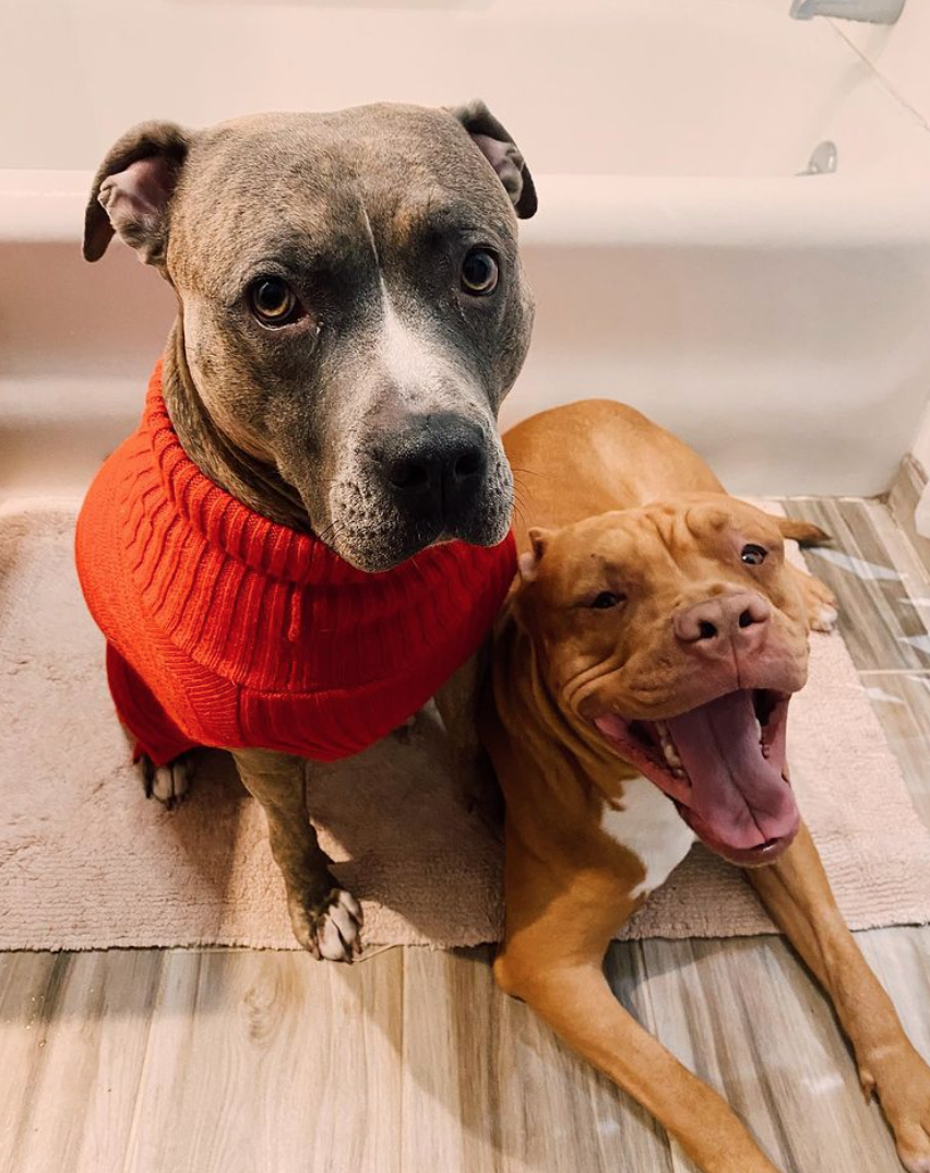 fall photoshoot ideas for dogs fall sweater