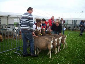 Photo: Klasse 7: 4, 5 en 9 jarige toggenburger geiten.  1a. Sarie 146 ( 9 jaar); 1b. Sarie's Casperina'JH'; 1c. bijschrijving JH; 1d. Sarie 170.