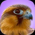 iBird Pro Birds North America icon