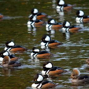 by Stephen Schutt - Novices Only Wildlife