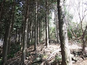 堆積岩の多い道