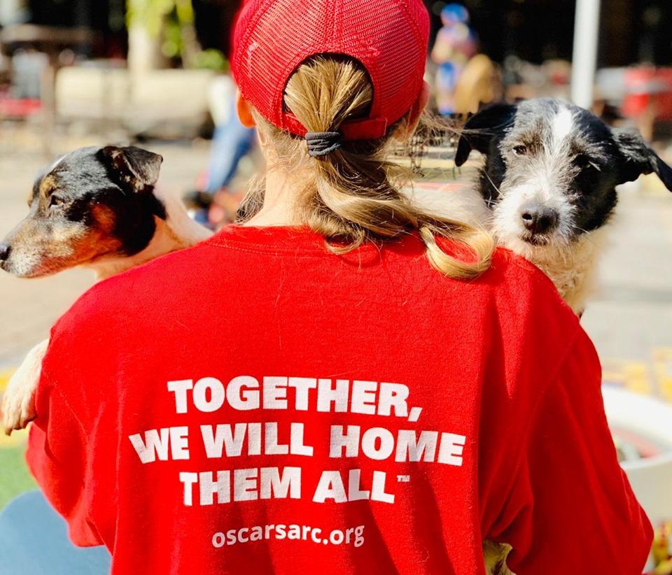 Hondeliefhebber is daarop gemik om wêreldrekord op te stel met die meeste aannemings van honde - TimesLIVE