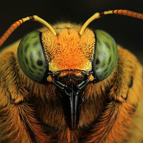 my face by Shikhei Goh II - Animals Insects & Spiders