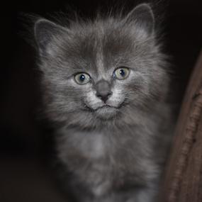 by Deanna Clark - Animals - Cats Kittens ( kitten,  )